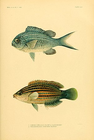 The fishes of Samoa (Plate XLIV) (5998450123).jpg