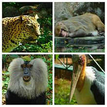 Thiruvananthapuram Zoo - Wikipedia