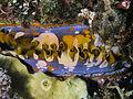 Thorny oyster.jpg