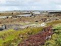 Tidal channel and quay - geograph.org.uk - 1433853.jpg