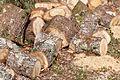 Tocos de madeira. Vilarromarís. Oroso. Galiza-2.jpg