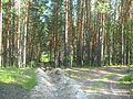 Tomsky District, Tomsk Oblast, Russia - panoramio (95).jpg