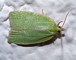 Alas de mariposa - 4 4