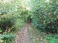 Track between Turners Lane and South Lodge Road, Hersham - geograph.org.uk - 70089.jpg