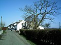 Tree and Houses - geograph.org.uk - 160102.jpg