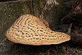 Tree fungus 2.jpg