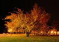 Tree retake (4056345826).jpg