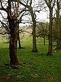 Trees in North Dale - geograph.org.uk - 1804243.jpg