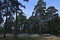 Trullhalsar Gravfält Anga 02.jpg