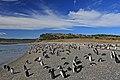 Tučňáci na pláži ostrova Martillo - panoramio.jpg