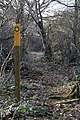Twenty Acre Wood, Six Hills, Leicestershire - geograph.org.uk - 148156.jpg