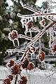 Twigs of the ice storm - panoramio (1).jpg