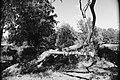 Twisted Tree (215647595).jpeg