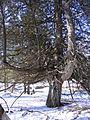 Twisted tree graffiti.jpg