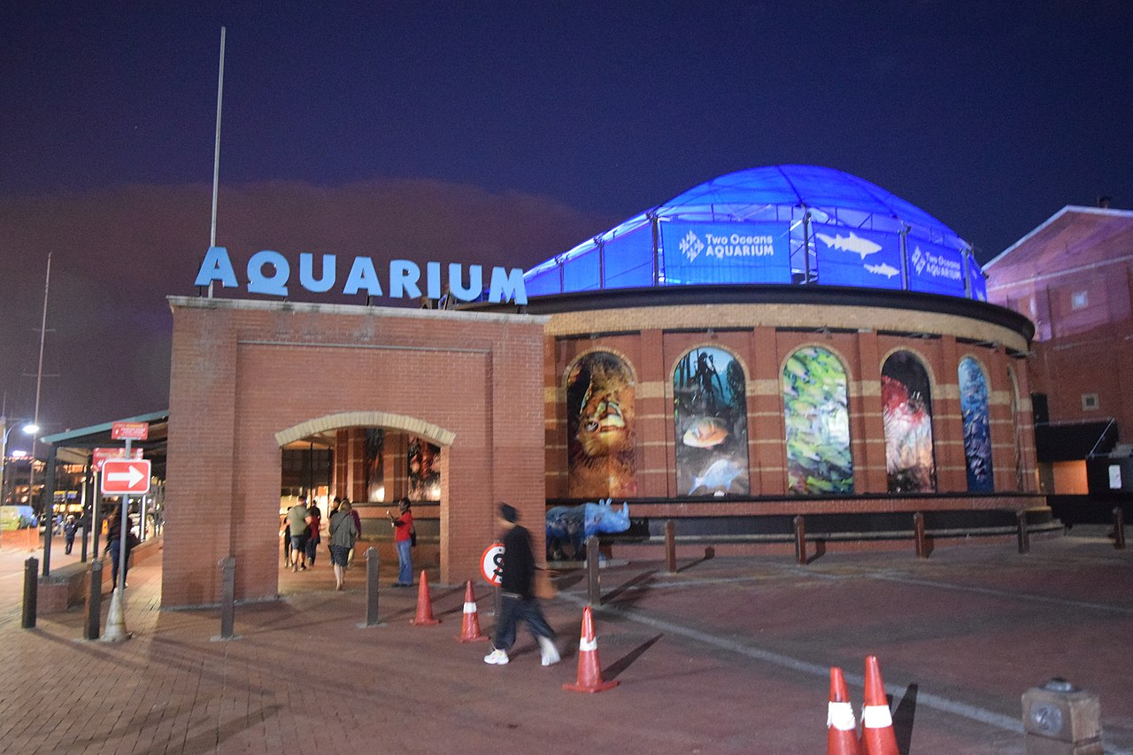 The Two Oceans Aquarium - Things to do in Cape Town for kids