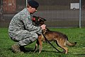 U.S. Air Force Staff Sgt. Rob Schneider, assigned to the 673rd Air Base Wing, 673rd Security Forces Squadron, plays with Kahn, a Belgian Malinois military working dog, after a training session at Joint Base 130826-F-LX370-293.jpg