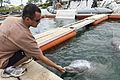 US Navy 080724-N-6270R-013 Aviation Structural Mechanic 2nd Class Shawn McDonald, a marine mammal handler assigned to Explosive Ordnance Disposal Mobile Unit (EODMU) 1, uses tactile reenforcement to bond with his Atlantic bottl.jpg