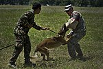 US and Philippine K-9 forces train together during Balikatan 2012 120419-F-MQ656-370.jpg