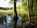 Uferbereich Aussichtspunkt Fauler See hsh Berlin.jpg