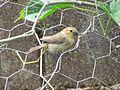 Undefined Bird.JPG