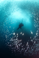 Underwater Photographer surrounded by Sardines.png