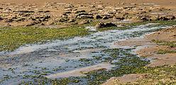 Uniek door eb en vloed steeds wisselend kweldergebied. Locatie, Noarderleech Provincie Friesland 004.jpg