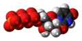Uridine triphosphate anion 3D spacefill.png