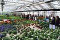 Växthuset på Forslunda.jpg