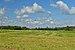 Valge-toonekured Palvere küla põllul.jpg