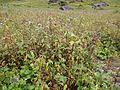Valley of Flowers 25.JPG