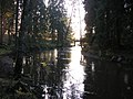 Vantaa river (10-2008) - panoramio.jpg
