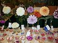 Ventura County Fair Award Winning Flowers - panoramio.jpg