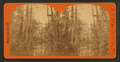 View of river and trees near Palatka?, from Robert N. Dennis collection of stereoscopic views.png