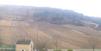 Vignoble de Saint-Aubin.JPG