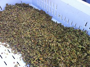 Yeast assimilable nitrogen - Most of a grape's YAN content is found in the skins and seeds which gets left behind as pomace after pressing.