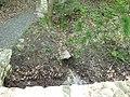 Vyžlovský rybník (018).jpg