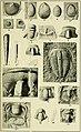 Walcott Cambrian Geology and Paleontology II plate 14.jpg