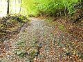 Waldweg - panoramio (15).jpg