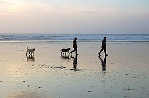 Walking the dogs on Godrevy beach at low water