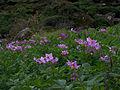 Whf purple 15.jpg