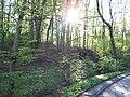 Wielkopolski Park Narodowy wiosną 7.jpg
