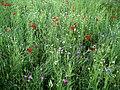 Wild flower show - geograph.org.uk - 451358.jpg