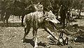 Wolf in trap, 1909-1918.jpg