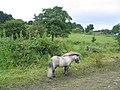 Woodhall Road - geograph.org.uk - 24928.jpg