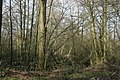 Woodland, Sevenoaks Wildlife Reserve - geograph.org.uk - 1720410.jpg