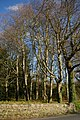 Woods on Mound Road - geograph.org.uk - 1099072.jpg