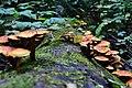 World Full Of Shrooms (231097721).jpeg