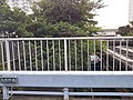 Yabeno bridge.jpg