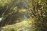 Yegoshikha River 1.jpg