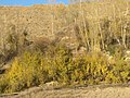 Yellow antumn in Kalateh BabaAhmad North of Mahdishahr - panoramio.jpg